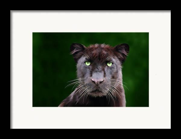 Saber Framed Print featuring the digital art Saber by Big Cat Rescue