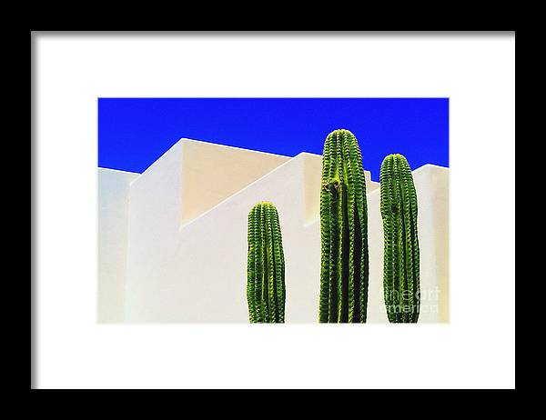 Cactus Framed Print featuring the photograph Saguaros by Gib Martinez