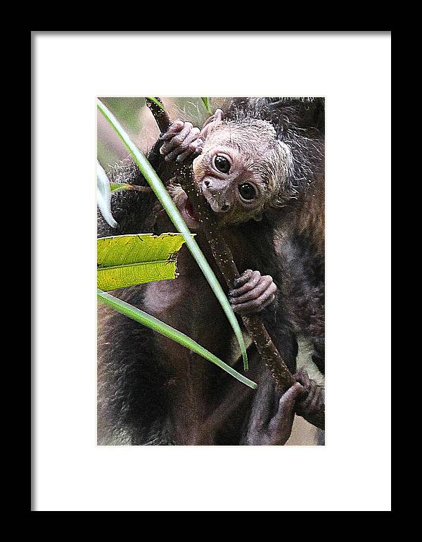 Mom Framed Print featuring the photograph Sak-monkey by Elizabeth Hart