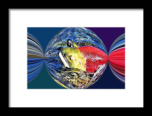 Salmon Framed Print featuring the photograph Salmon Party Popper by Don Mann