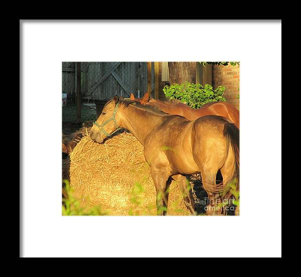 Horse Framed Print featuring the photograph Sandy Eating Hay by Michelle Powell