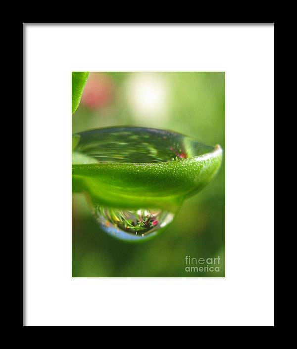 Flower Framed Print featuring the photograph Scenic Photography by Tina Marie