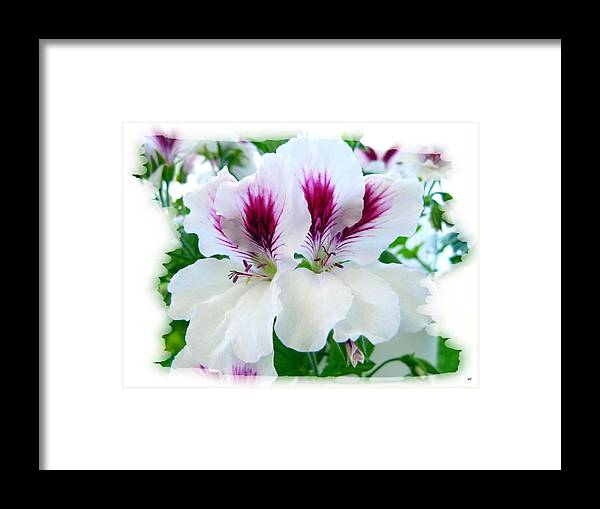 Scented Geraniums Framed Print featuring the photograph Scented Geraniums 2 by Will Borden