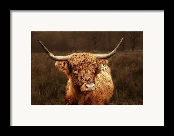 Scotland Framed Print featuring the photograph Scottish Moo Coo - Scottish Highland Cattle by Christine Till