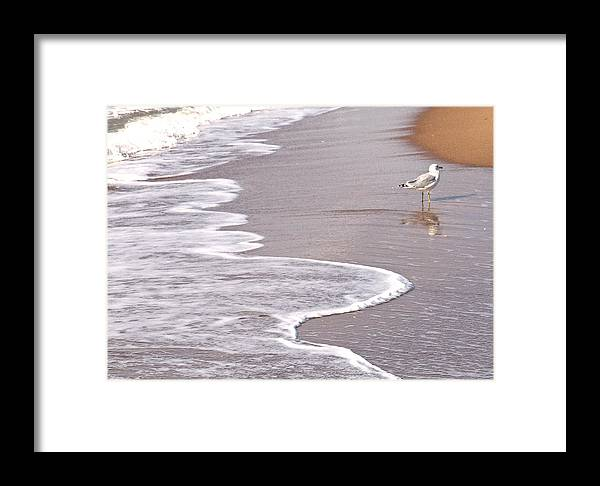 Sea Gull Walking On The Beach On A Hot Summer Day Framed Print featuring the photograph Sea Gull Reflection by Cindy Lee Longhini