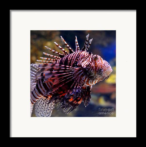 Sea Lion Framed Print featuring the digital art Sea Lion by Pravine Chester