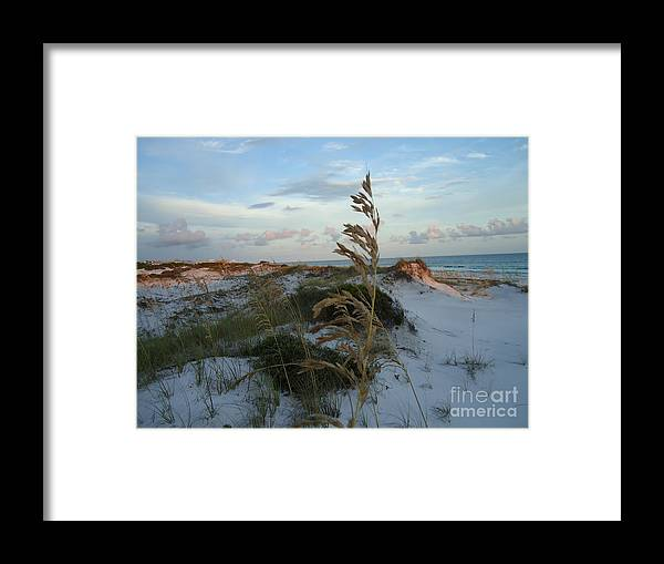 Photography.landscape Grayton Beach Framed Print featuring the photograph Sea Oat by April Murray