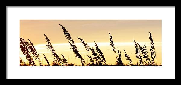 Matte Print Framed Print featuring the photograph Sea Oats Dancing by Kim Galluzzo Wozniak