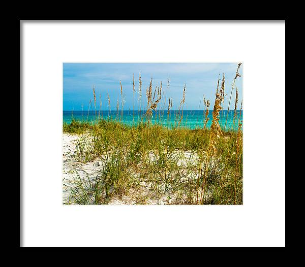 Sea Oats Framed Print featuring the photograph Sea Oats Gulf - Destin by Ernest Hamilton