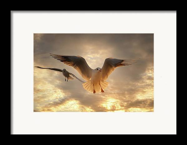 Horizontal Framed Print featuring the photograph Seagull by GilG Photographie