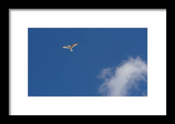 Seagull Framed Print featuring the photograph Seagull in the Sky by Jessica Cruz