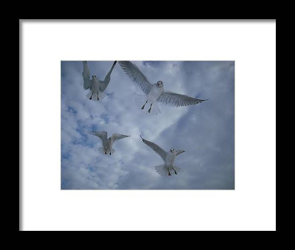 Seagulls Framed Print featuring the photograph Seagulls by Jennifer Eddiba