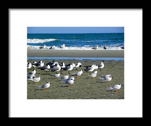 Sea Gulls Framed Print featuring the photograph Seagulls Waiting by Eve Spring