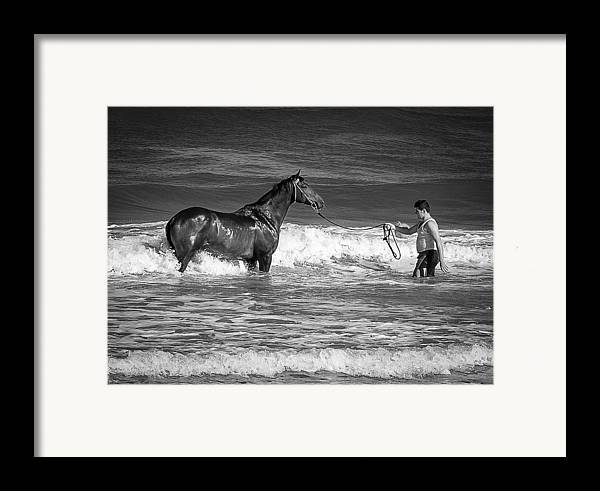 500px Framed Print featuring the photograph Seahorse by Michael Avory