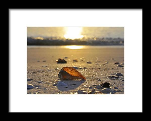 Sea Shell Framed Print featuring the photograph Seashells and Sunshine by Christine Stonebridge