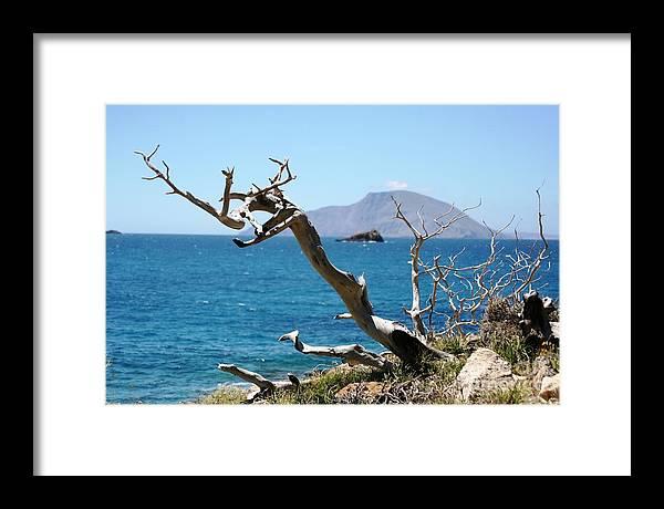 Tree Framed Print featuring the photograph Seaside Tree by Phoenix Michael Davis