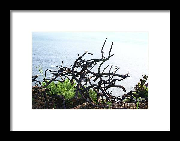 Seaside Trees Landscape Water Sea Nature Framed Print featuring the photograph Seaside Trees. by Edgars Gasperovics