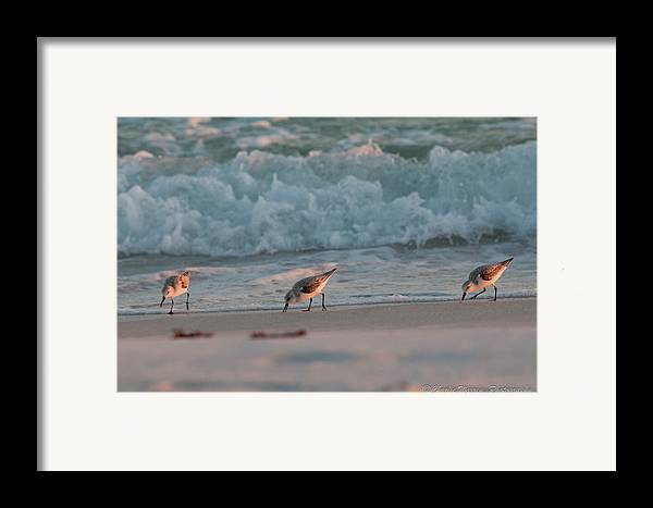 Seaside Framed Print featuring the photograph Seaside Trio by Charles Warren