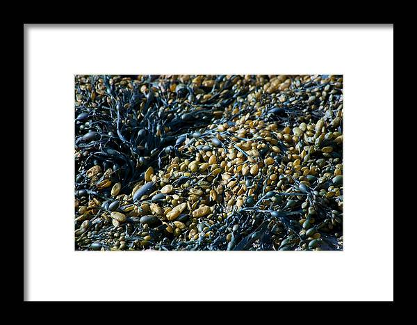 Tags: Beach Photographs Framed Print featuring the photograph Seaweed by Daniel Smith