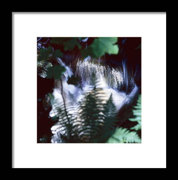 Plant Framed Print featuring the photograph Secret Cascade by Ulrich Kunst And Bettina Scheidulin