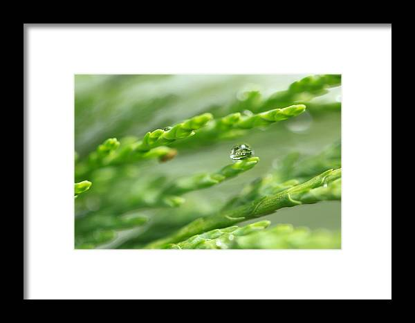 Dew Framed Print featuring the photograph See The World In The Morning Dew by Pan Orsatti