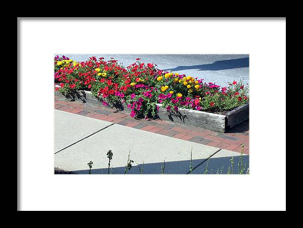 Flowers Framed Print featuring the photograph Seeing Beauty by Marlene Robbins