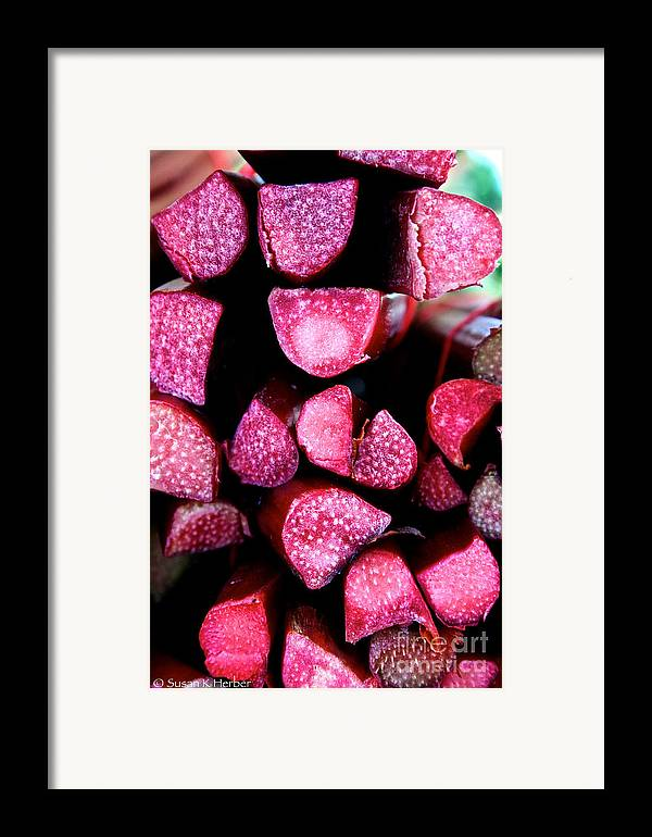 Food Framed Print featuring the photograph Seeking Pie Crust by Susan Herber