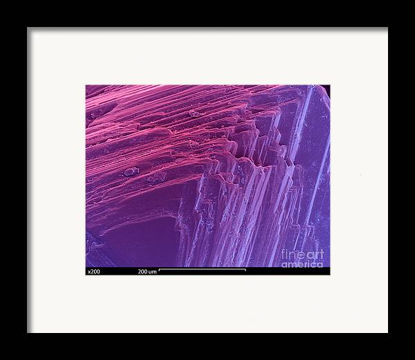 Sem Framed Print featuring the photograph Sem Of A Diamond by Ted Kinsman