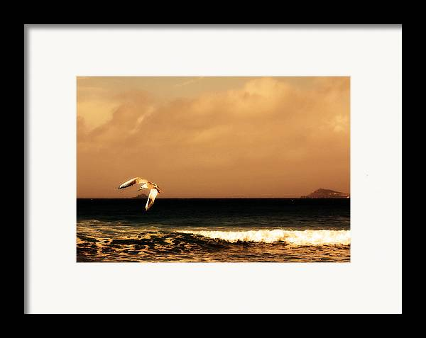 Seagull Framed Print featuring the photograph Sennen Seagull by Linsey Williams