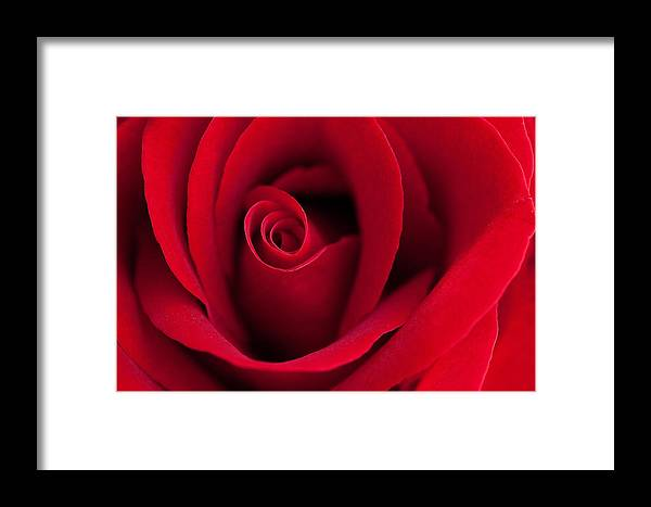 Affection Framed Print featuring the photograph Sensual Red by Juriah Mosin