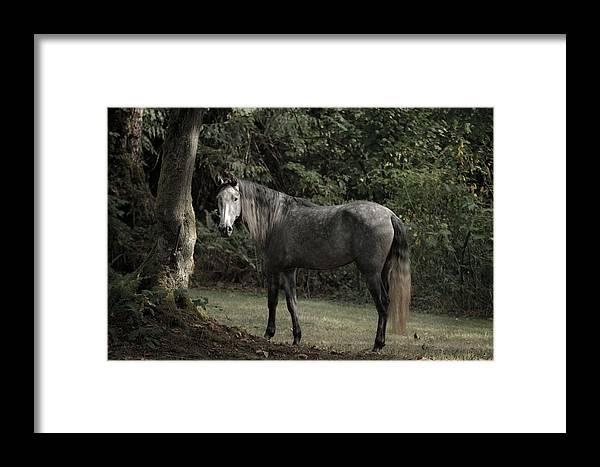 Serene Forest Framed Print featuring the photograph Serene Forest by Wes and Dotty Weber
