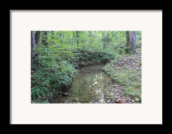 Green Framed Print featuring the photograph Serene Green by James Collier