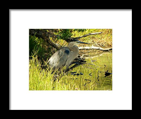 Bird Framed Print featuring the photograph Shade by Michael Snyder