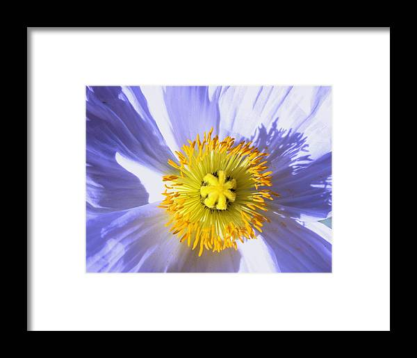 Garden Framed Print featuring the photograph Shadow And Light by M Diane Bonaparte