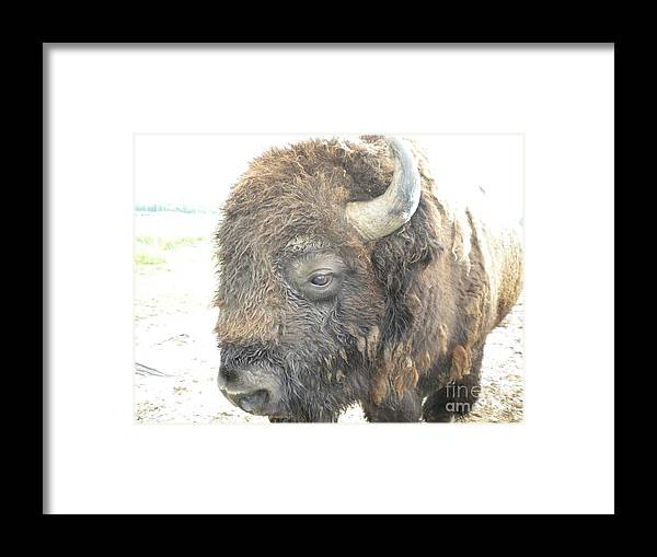 Animal Framed Print featuring the photograph Shag by Tessa Priddy