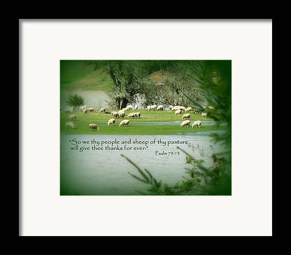 Cindy Framed Print featuring the photograph Sheep Grazing Scripture by Cindy Wright