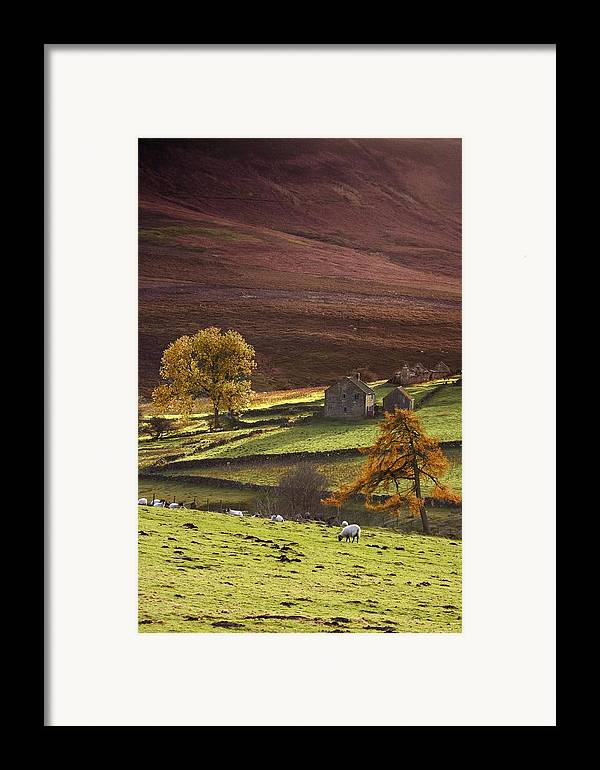 Animals Framed Print featuring the photograph Sheep On A Hill, North Yorkshire by John Short