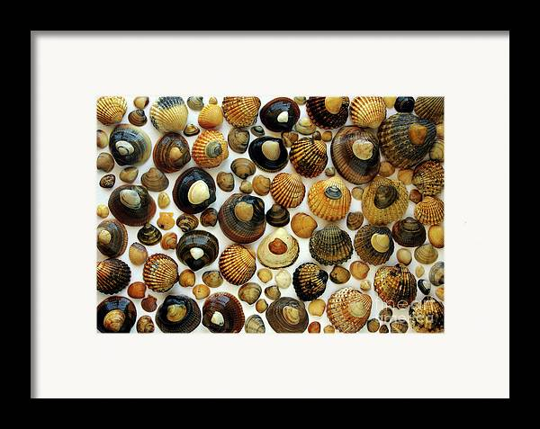 Aquatic Framed Print featuring the photograph Shell Background by Carlos Caetano
