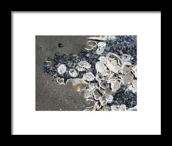 Shells Framed Print featuring the photograph Shells At Folly by Aimee Bruno