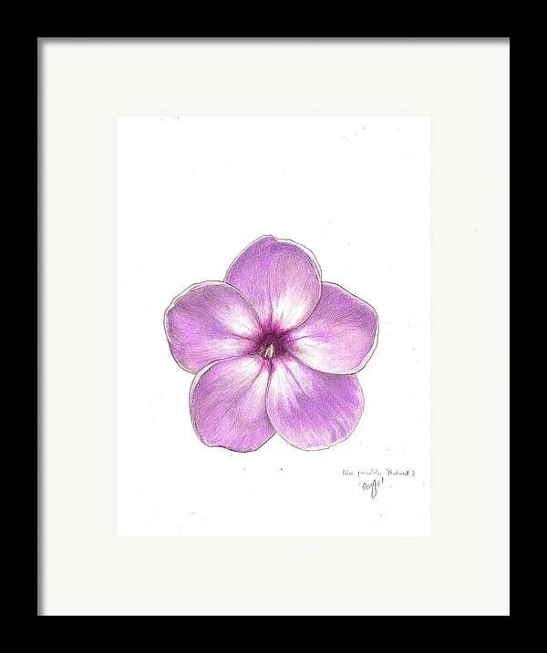 Phlox Framed Print featuring the drawing Shortwood Phlox 2 by Steve Asbell