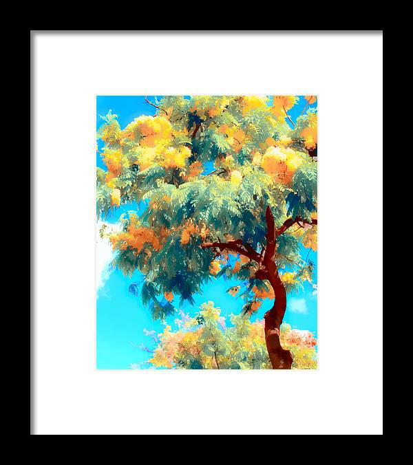 Trees Framed Print featuring the photograph Shower Trees by Joe Carini