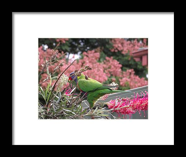 Bird Framed Print featuring the photograph Showing Off by Rani De Leeuw