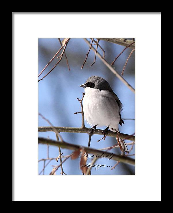 Shrike Framed Print featuring the photograph Shrike - Lonely - Missing You by Travis Truelove