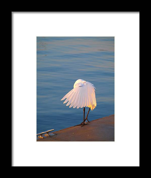 Heron Framed Print featuring the photograph Shy by Judy Waller