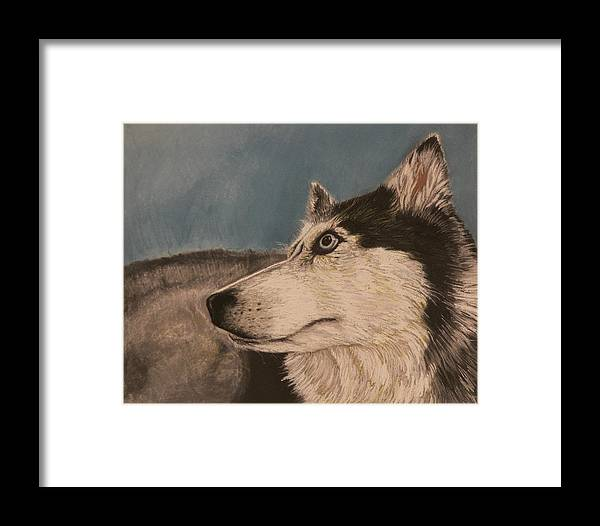 Pastel Framed Print featuring the drawing Siberian Husky by Robert Decker