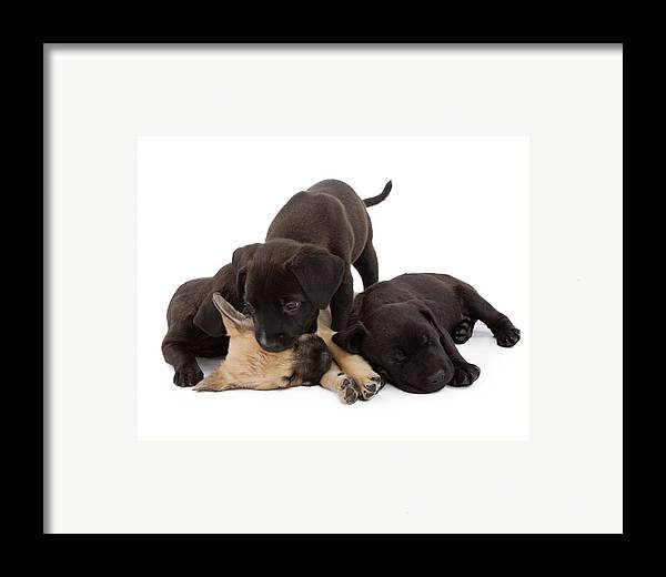Dog Framed Print featuring the photograph Sibling Rivalry by Susan Schmitz