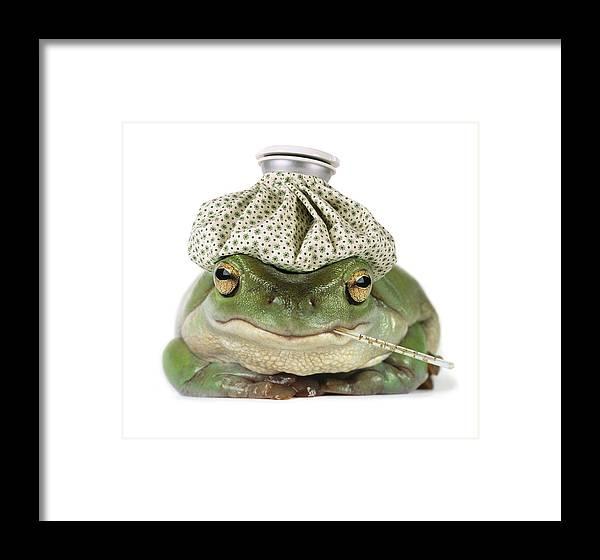 Sick Frog Framed Print by Darwin Wiggett