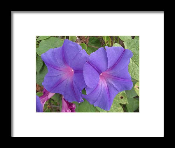 Flower Framed Print featuring the photograph Side By Side by Rani De Leeuw