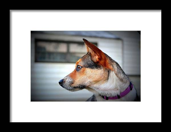 Framed Print featuring the photograph Side Look by Katrina Johns