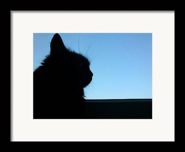 Cat Framed Print featuring the photograph Silhouette by Lucy D